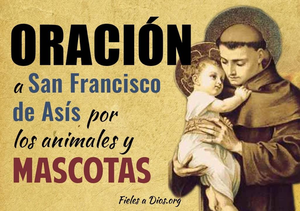 oracion a san francisco de asis por los animales y mascotas